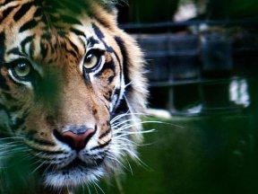 Animals | Melbourne Zoo