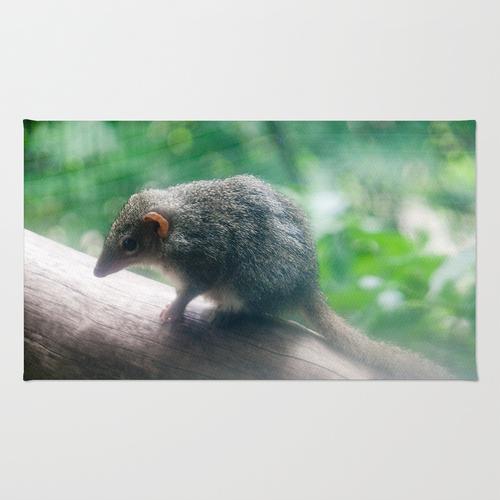 Kangaroo Island Dunnart